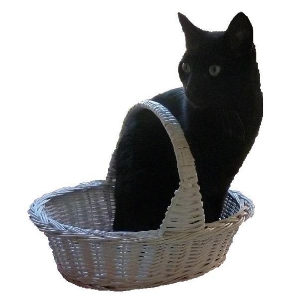gato en cesta de mimbre